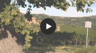 Ciacci Piccolomini d'Aragona winery creates a perfect blend of tradition and technology with Microsoft Teams Post Preview